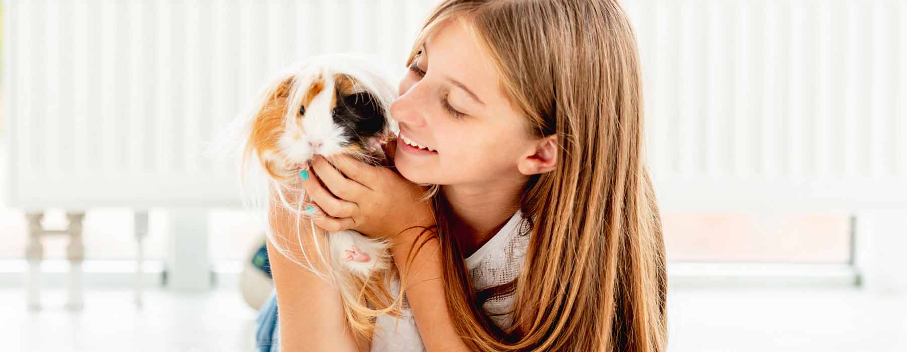 girl holding a long haired guinea pig