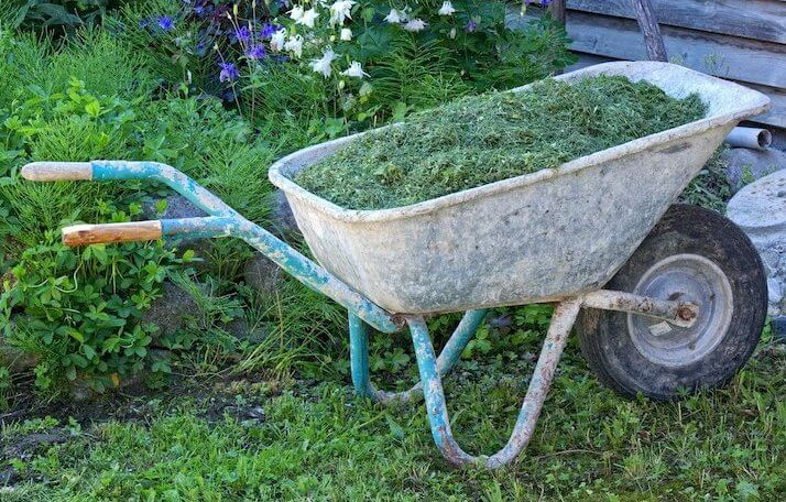 old wheelbarrow filled with grass clippings in a wild garden