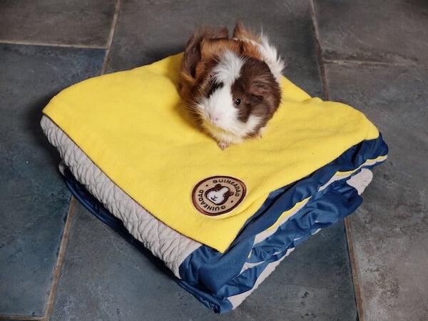 Guineadad fleece liner for  guinea pigs