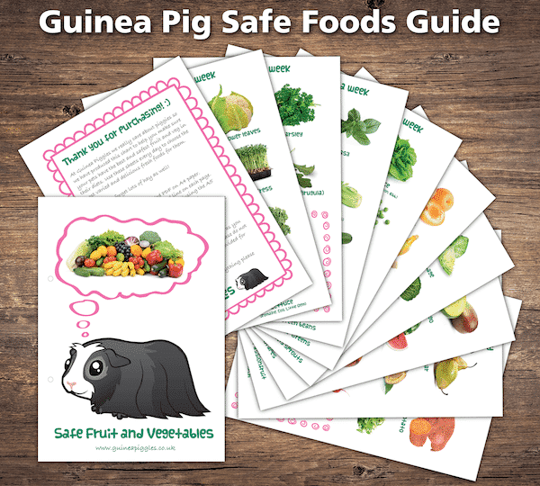Guinea pig care sheets and checklists